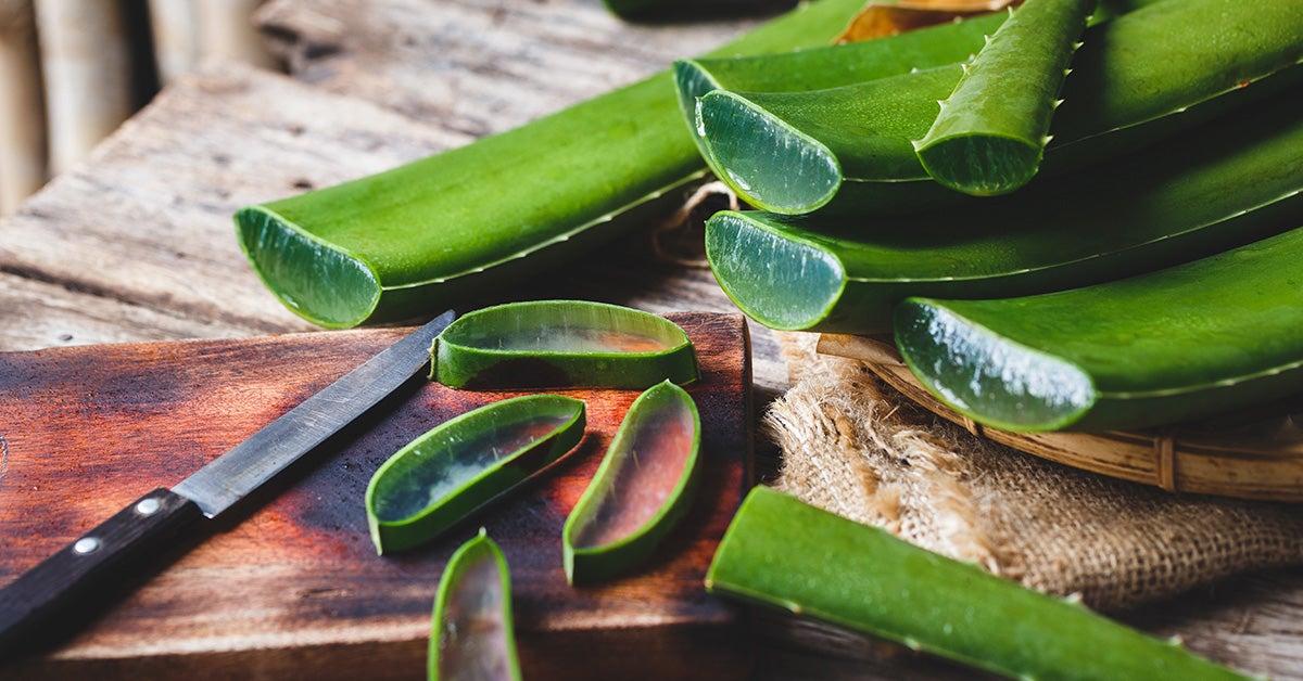 Harvest Aloe Vera Plant