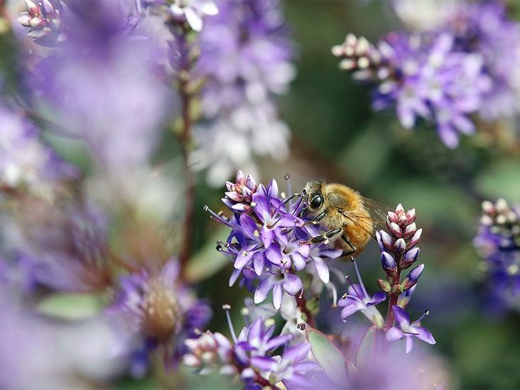 8 Benefits of Bee Pollen: Nutrition