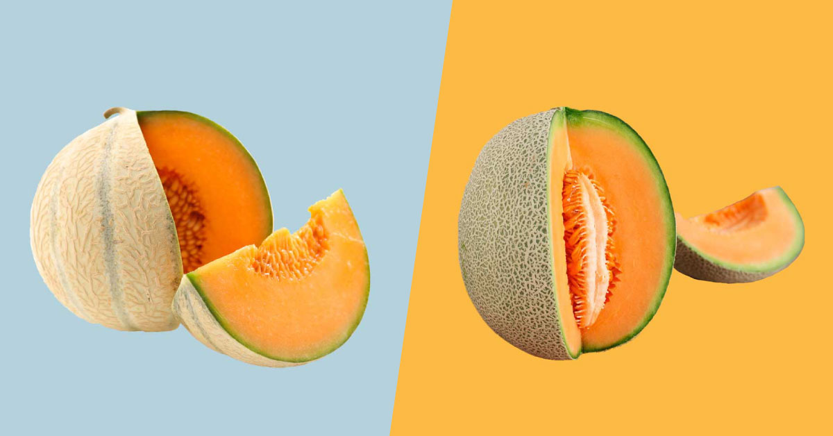 Muskmelon Vs Cantaloupe What S The Difference Cantaloupe's high antioxidant activity helps scavenge free radicals before they cause damage. muskmelon vs cantaloupe what s the