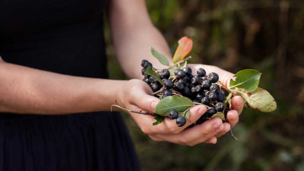 10 Tasty Wild Berries To Try And 8