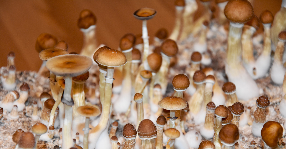 buy mushrooms online