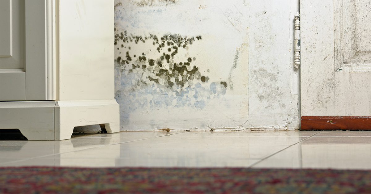 Can Black Mold Really Help