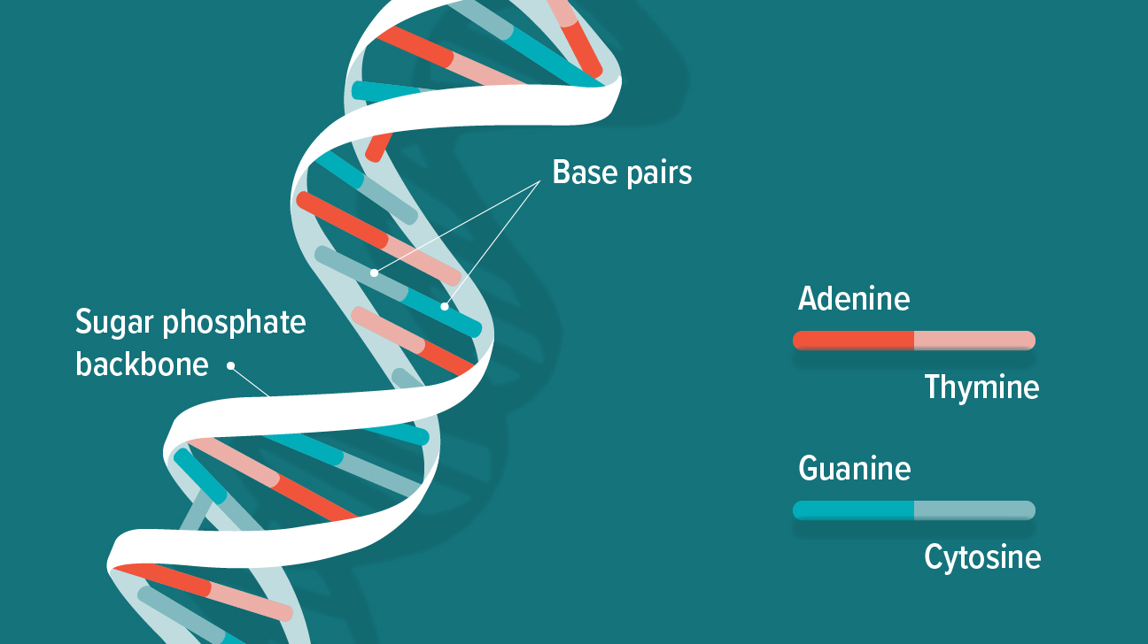 What Is DNA? Structure, Function, Pictures & Facts