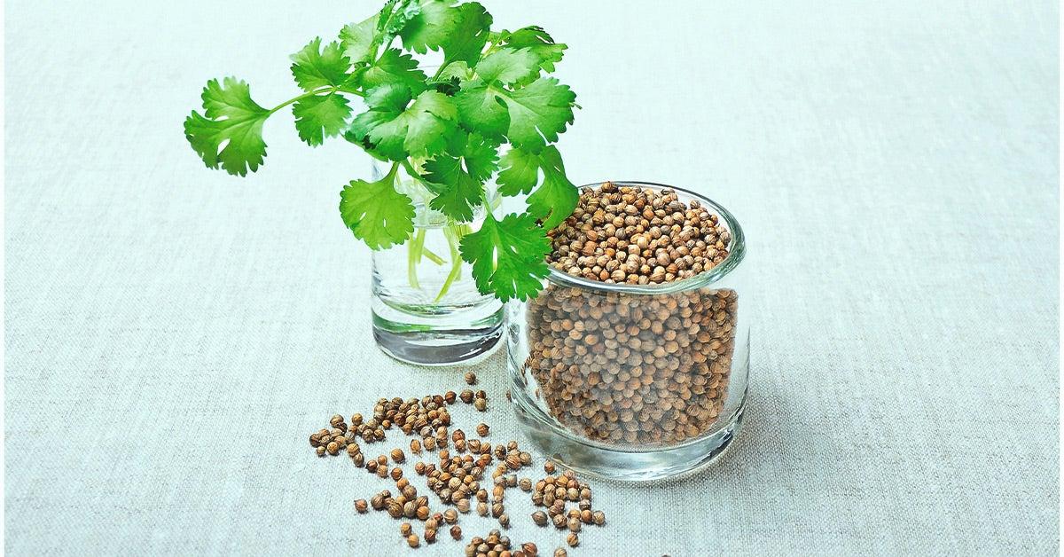 koriander allergi symptom