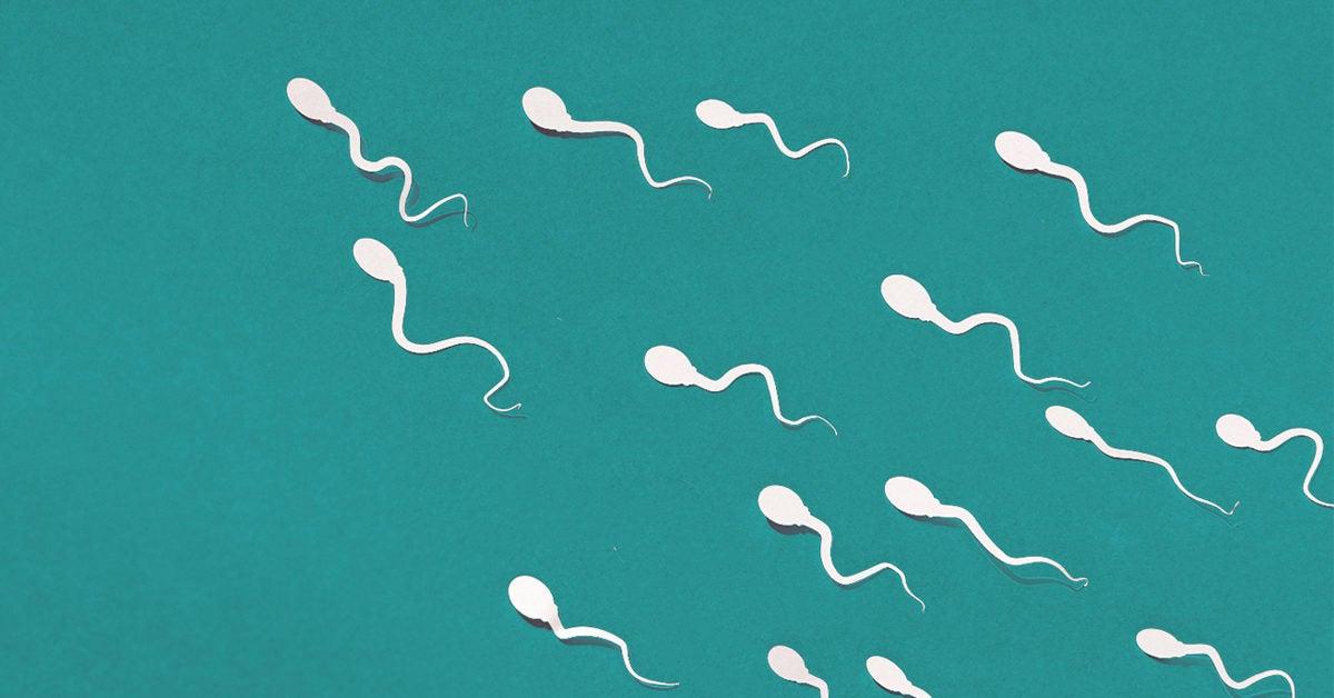 Faible nombre de spermatozoïdes: causes, signes, traitement, chances de grossesse