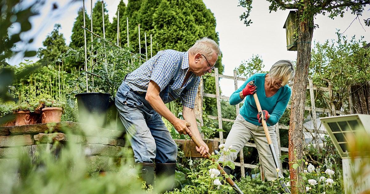 Older Adults Can Reduce Brain Shrinkage by Gardening, Dancing, Walking