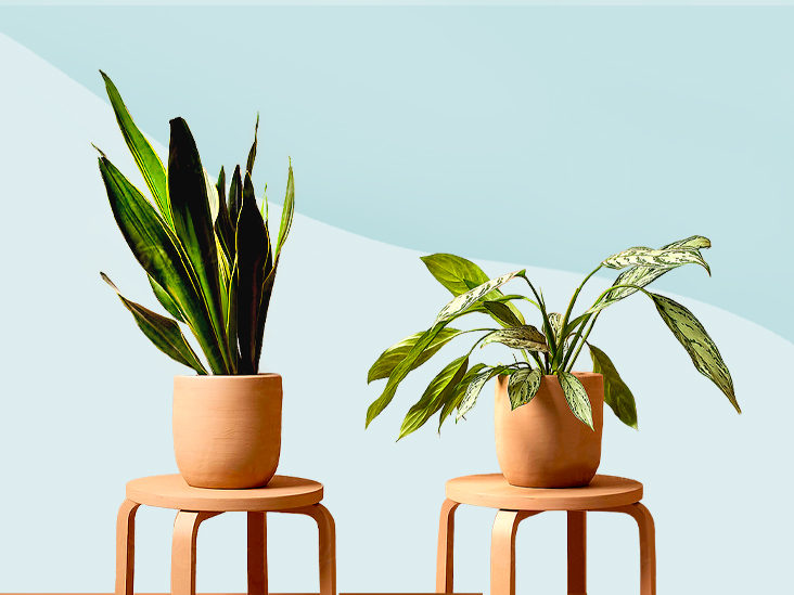 11 Low Maintenance Plants for the Forgetful Type