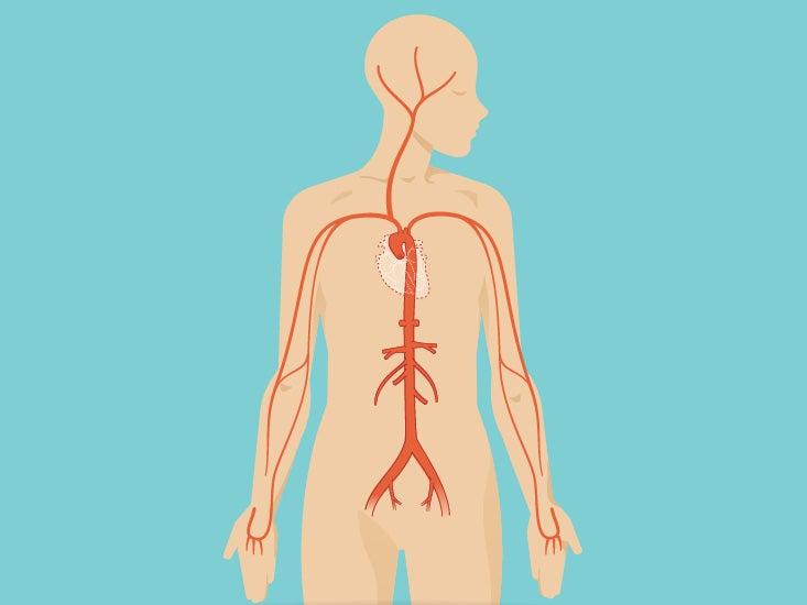 Abdomen Anatomy Area Diagram Body Maps