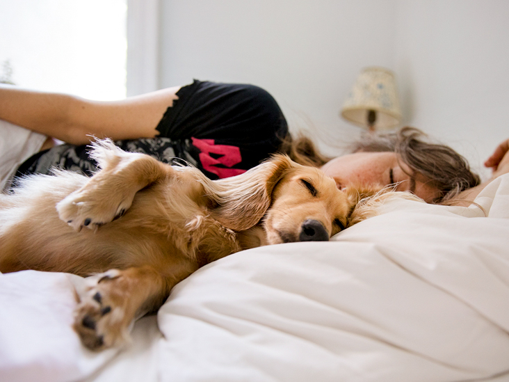 Sleeping with Dogs: Benefits for Your Health, Risks, and Precautions