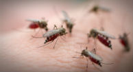 Which Communities Will Be Hit Hardest by West Nile Virus This Year?