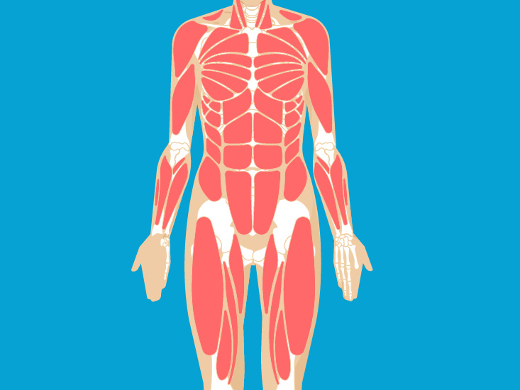 Foot Muscles Anatomy Function Diagram Body Maps