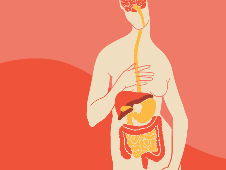 How the Gut-Brain Connection Works