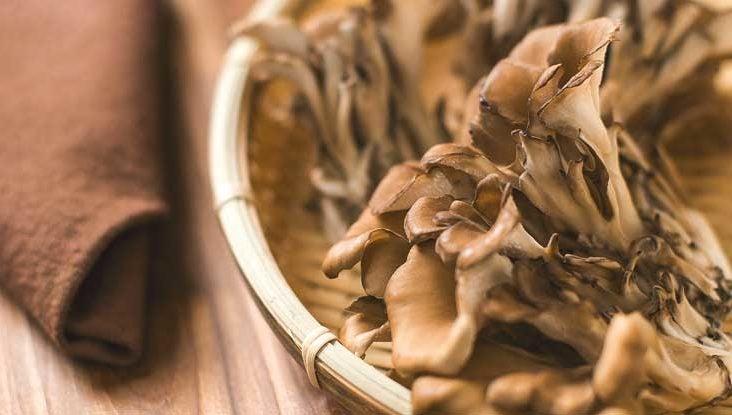 The Magical Maitake Mushroom
