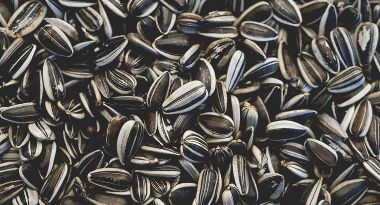 Calories in Sunflower Seeds: Are They