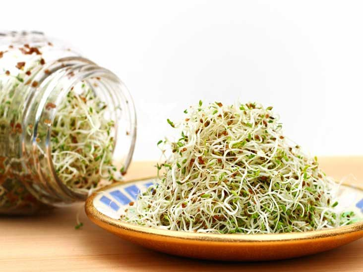 Alfalfa - Benefits, Nutrition Facts & Side Effects
