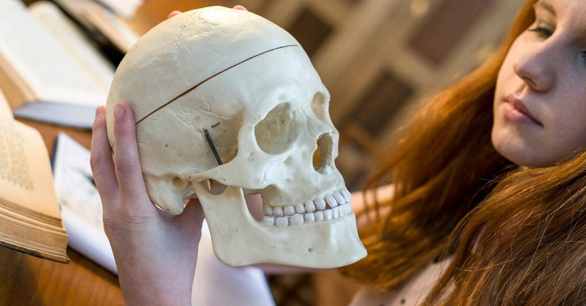 Cranial Bones: Function and Anatomy, Diagram, Conditions, Health Tips