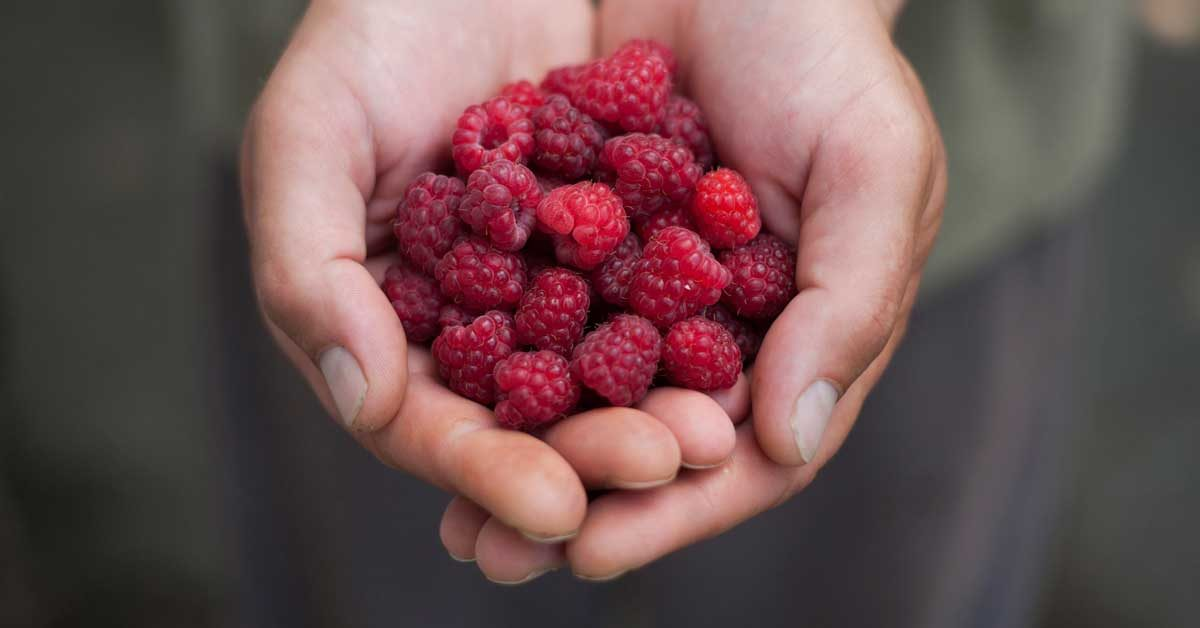 Red Raspberries Nutrition Facts Benefits And More
