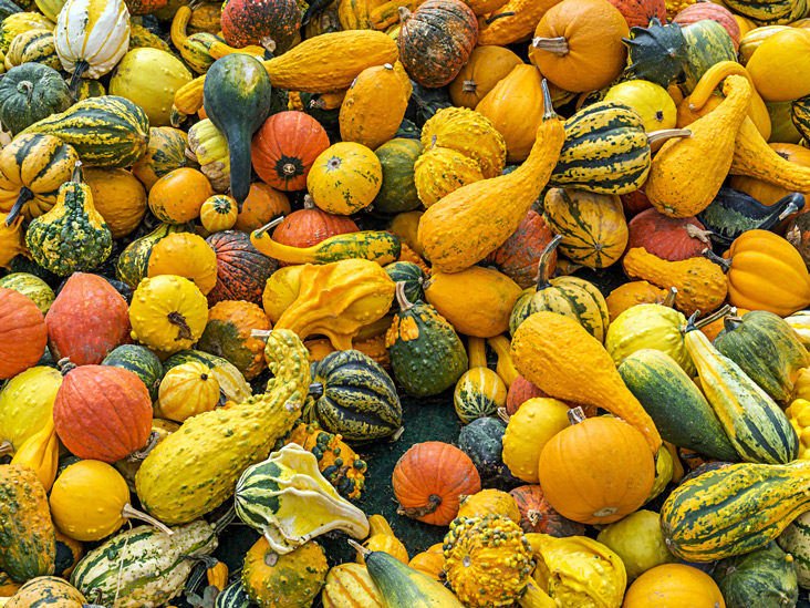 is squash good for a diet