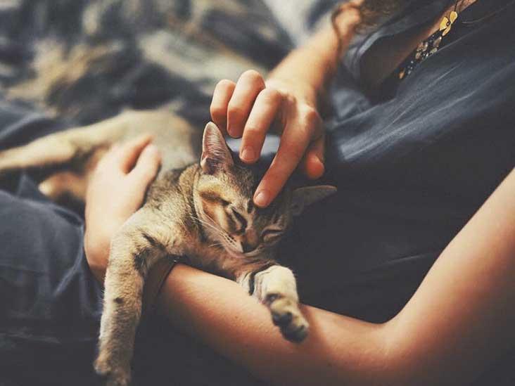 cat pee precarious pregnancy