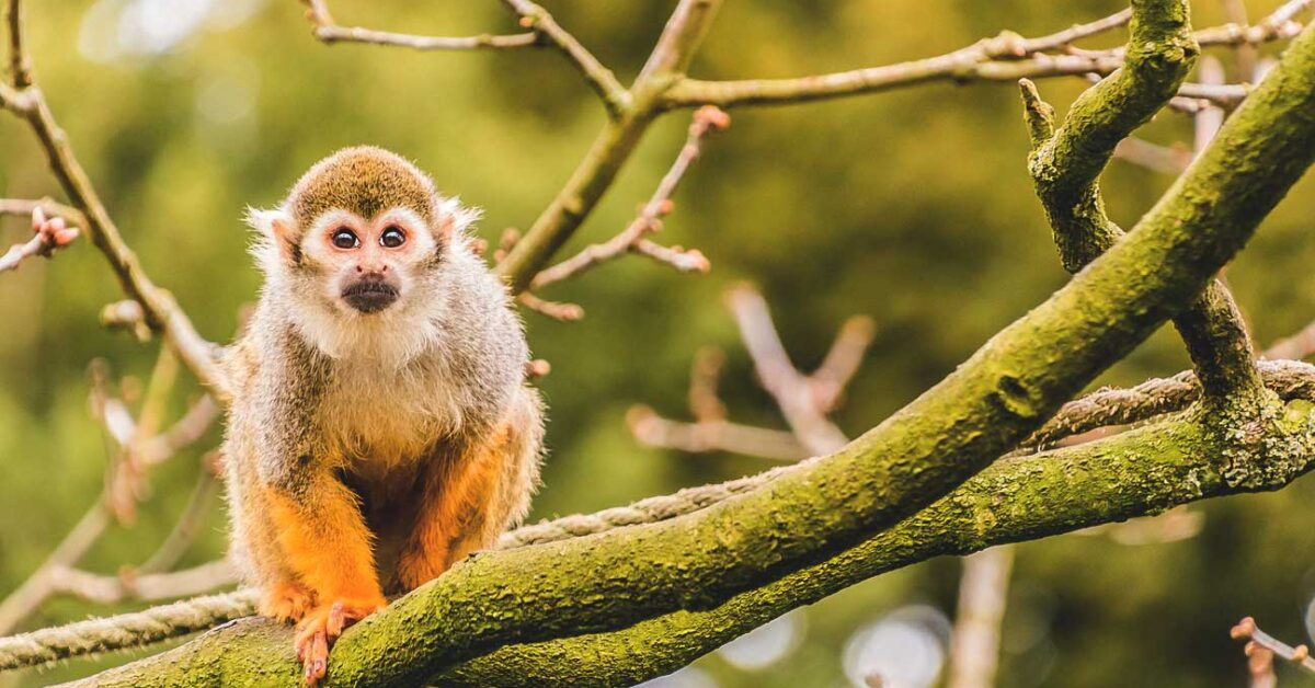 Avoid Monkeys In Florida Because They Could Give You