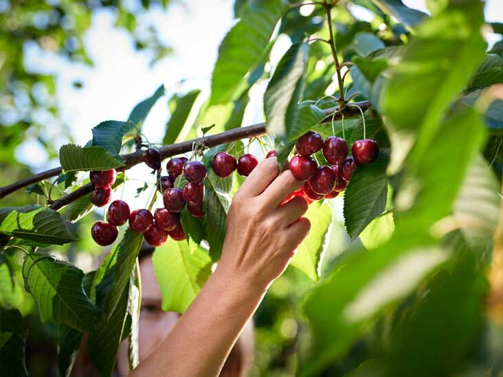 7 Impressive Health Benefits of Cherries