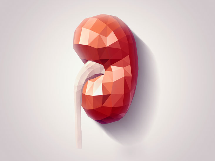 Kidney Removal Reasons Types And Benefits