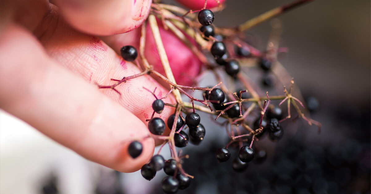 Elderberry While Pregnant: What to Know About Safety