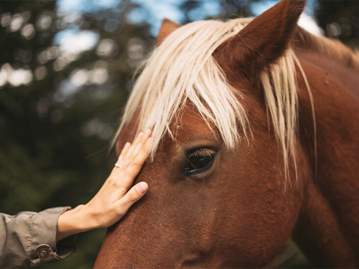 Finding Fitness on the Back of a Horse