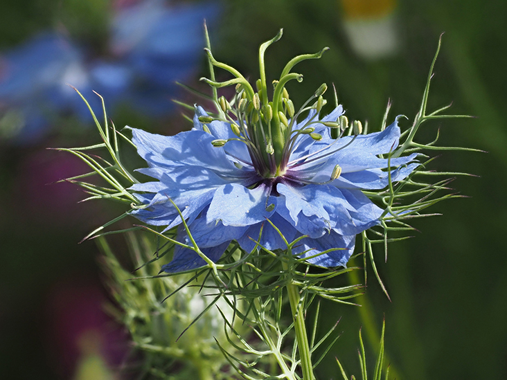 5 Impressive Herbs That Help Balance Your Hormones
