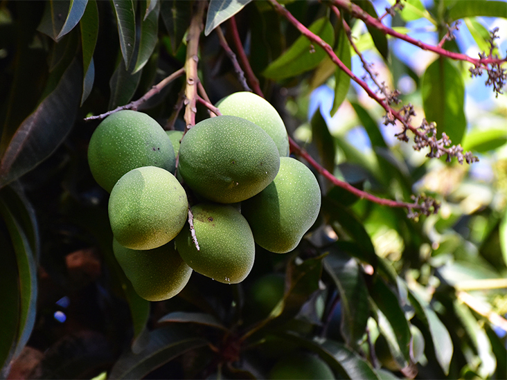 What Is African Mango and Its Extract? Weight Loss and More