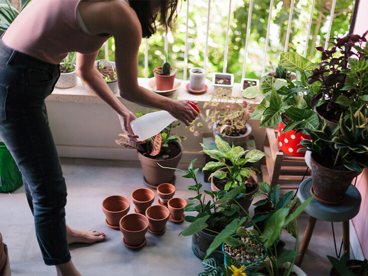 How Watering My Plants Reminds Me to Take Care of Myself