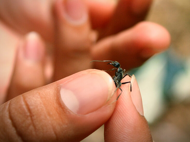 All You Need to Know About Eating Ants