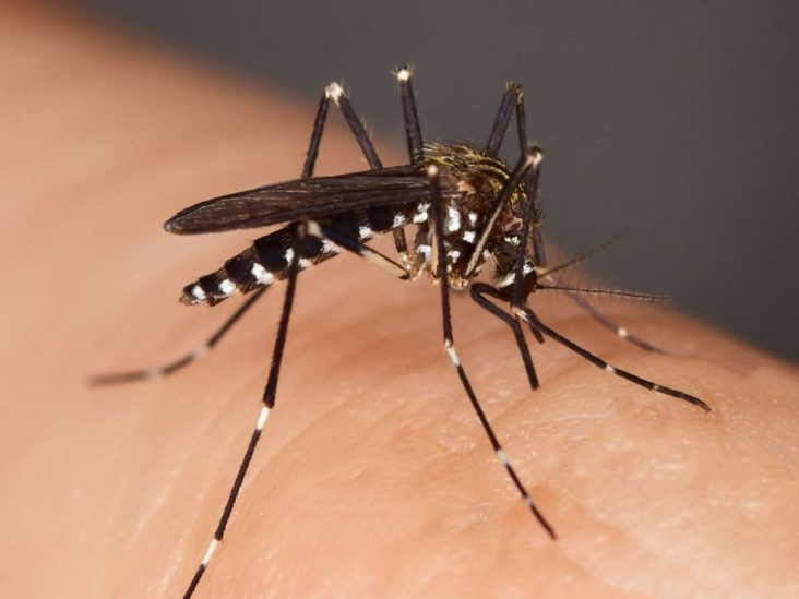 Why Do Mosquito Bites Itch Causes And Treatment