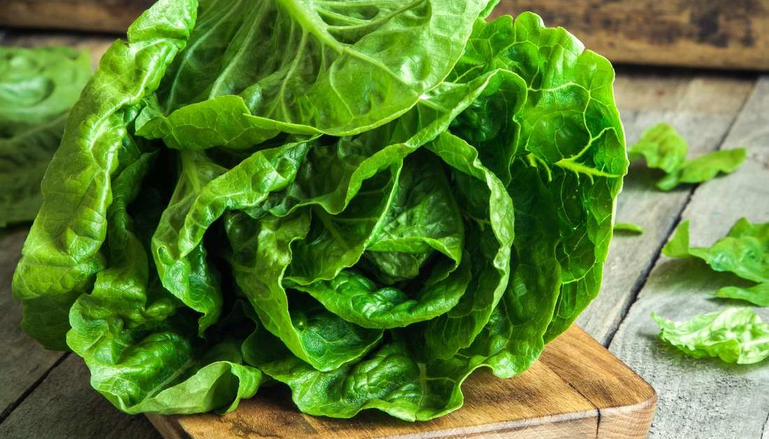 Romaine Lettuce Nutritional Information And Health Benefits