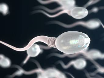 Saliva can interfere with sperm motility